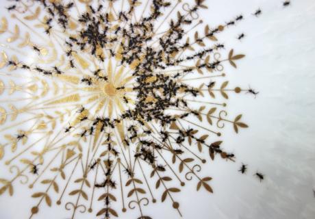 당신의 식탁에 개미들이 우글거린다면?